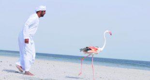 Abu Dabi'den İran'a uçan maceracı flamingo