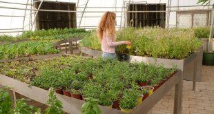 Dubai'nin Sürdürülebilir Şehri kendi gıdasını üretiyor