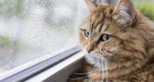 Kediler dünyaya Türkiye'den yayılmış