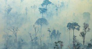 Amazon'daki  yangın şimdilik kontrol altında