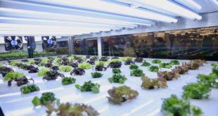 Carrefour, karbon ayakizini azaltmak için BAE'de ilk çiftlik mağazacılığını başlattı