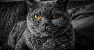 Kedilerin yüz ifadeleri var ama insanlar anlamıyor