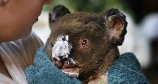 BAE Doğa Derneği, Avustralya'da yangından etkilenenler için bir bağış toplama platformu başlattı