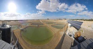 Deniz suyuyla sulanan çöl topraklarında gıda ve yakıt üretilecek