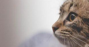 Çin'in Şenzen kentinde köpek ve kedi etinin yenilmesi yasaklandı