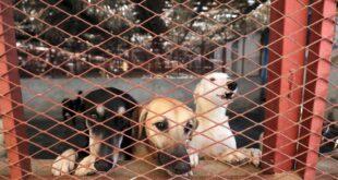 Kahire'nin kedi ve köpeklerinden mesaj var: Bizi terk etmeyin, biz koronavirüs yaymıyoruz