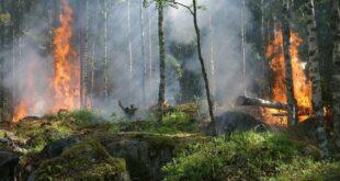 Ormanların yok edilmesi ölümcül salgınlara yol açabilir