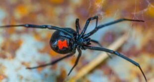 Örümcek Adam'a dönüşmek isteyen kardeşler kendilerini karadula ısırttı