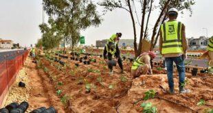 Riyad 23 milyar dolarlık proje ile yeşillenecek