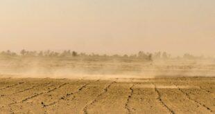 Sahra Çölü'nden Amerika'ya giden devasa toz bulutunun ekosisteme ne yararı var?