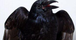 Kuş beynine dair çığır açan buluş