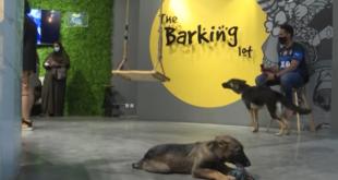 Suudi Arabistan'ın ilk köpek kafesi (VİDEO)