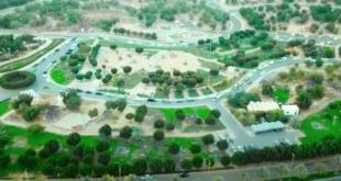 Medine'de 3 bin 500 fidan toprakla buluştu