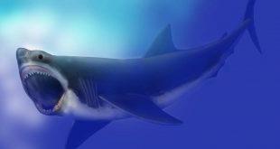 Gelmiş geçmiş en büyük köpekbalığının hassas noktası ortaya çıktı
