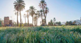 Suudi Arabistan ve Japonya çevreyi korumak için mutabakat zaptı imzaladı