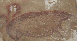Dünyanın en eski hayvan resmi keşfedildi