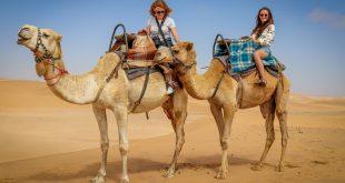 Pandemiye karşı yeni umut: Tek hörgüçlü develer