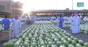 Suudi Arabistan'da karpuz sezonu açıldı (VİDEO)