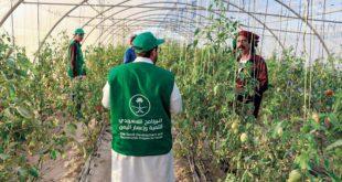 SDRPY, Yemen'in el-Mahra vilayetinde gıda güvenliğini sağlamaya katkı sağlıyor